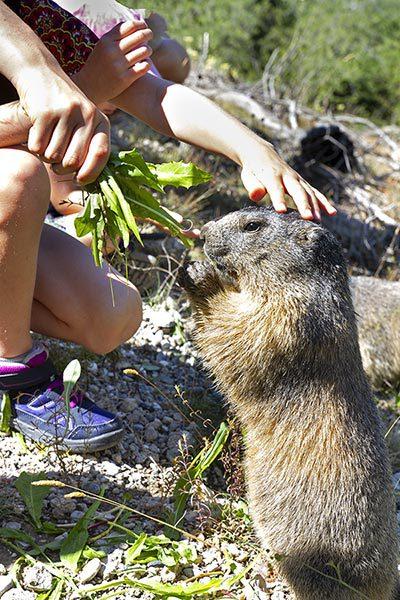Le sentier des marmottes - Hautes-Alpes