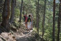 Groupe de randonneurs en forêt